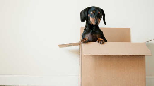 How to Find a Trusted Removalist in Australia